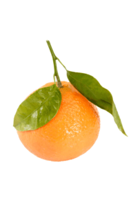 Le Citrus aurantium en phytothérapie