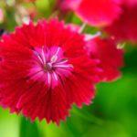 Le langage des fleurs et les superstitions, ca vous parle ?