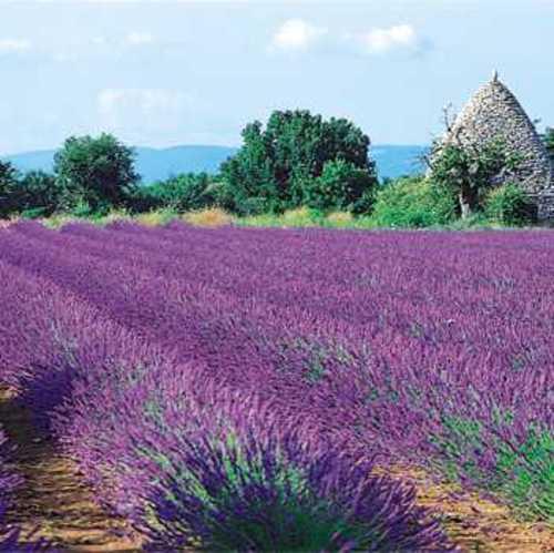 La meilleure saison pour se rendre en Provence.