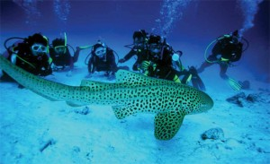 La plongée sous-marine en Thaïlande