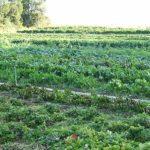 Faut-il consommer bio pour un environnement protégé ?