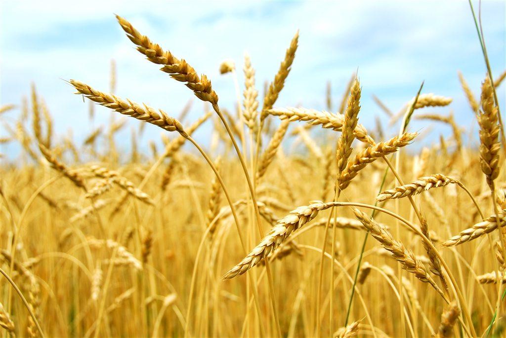 Les effets de l'agriculture biologique sur l'environnement