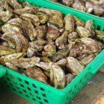 Où acheter des huîtres sur en ligne ?