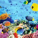 Peut-on aller aux Seychelles pour se marier?