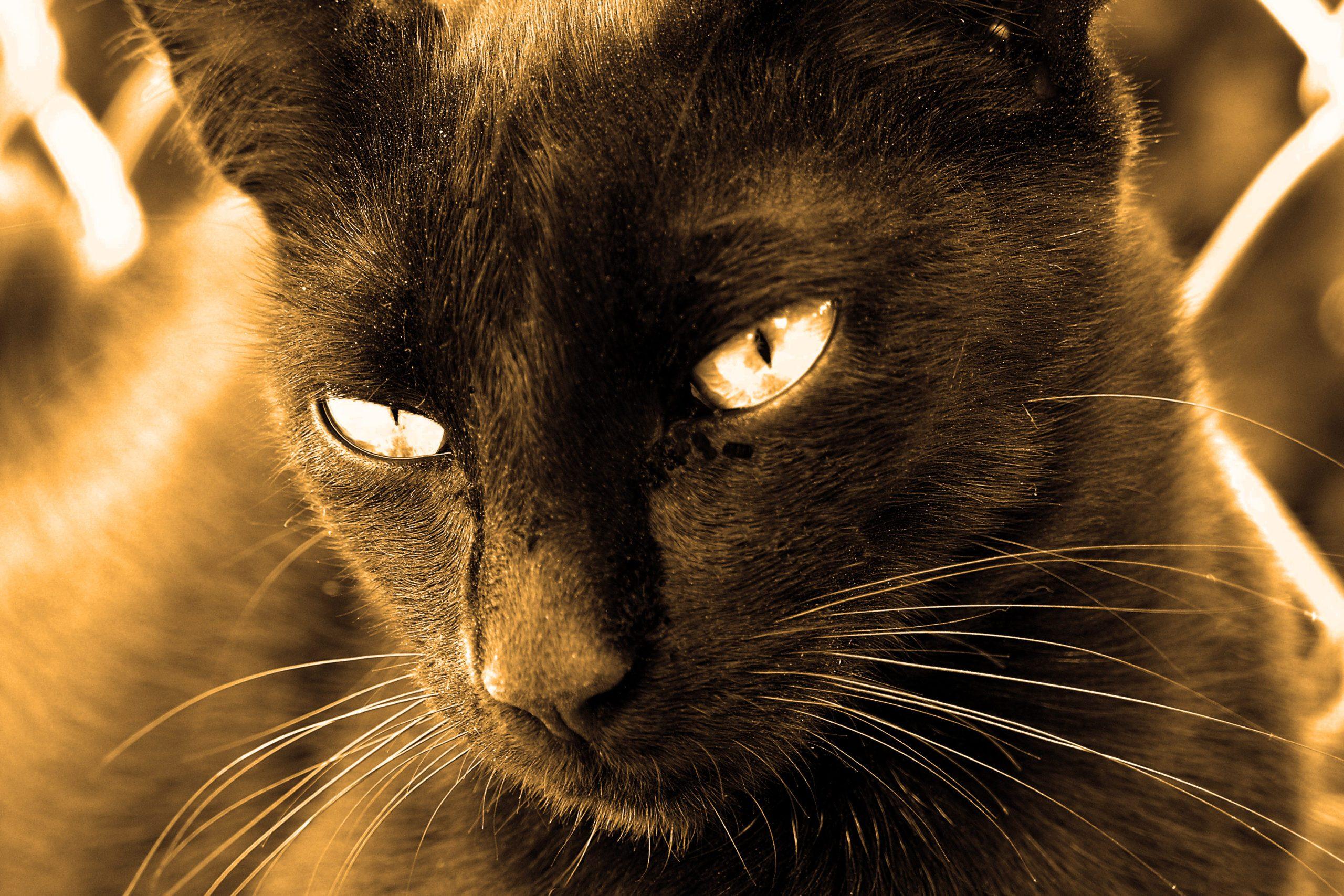Dénichez la meilleure assurance pour votre chat