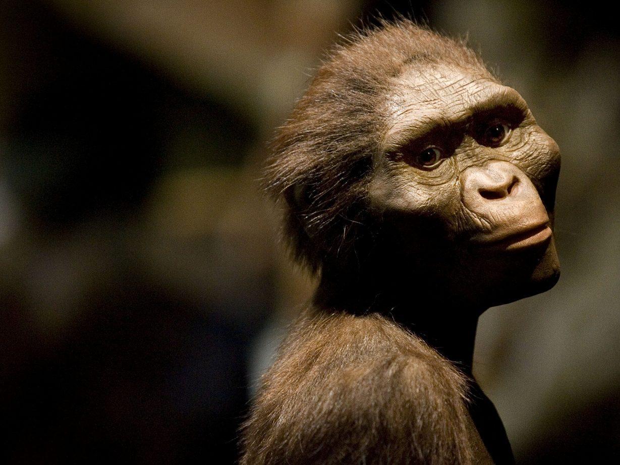 Lucy, l'australopithèque la plus célèbre de la planète fête ses 41 ans