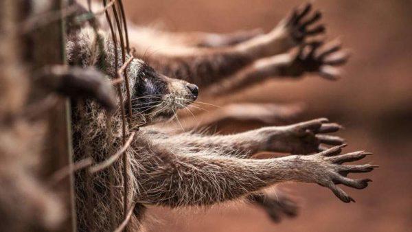 éliminer toutes les collections basées sur des fourrures animales