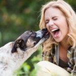 Les cinq astuces nécessaires pour prendre soin de la santé de votre chien