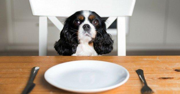 Quel type de repas donner à son chien?